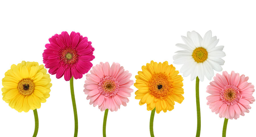 Colorful flowers isolated on a white background