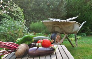 Freshly-Harvested-Vegetables